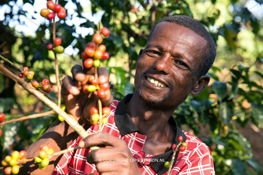 Fairtrade-Nederland-Koffie-Ethiopië-Effecten-klimaatverandering (16)