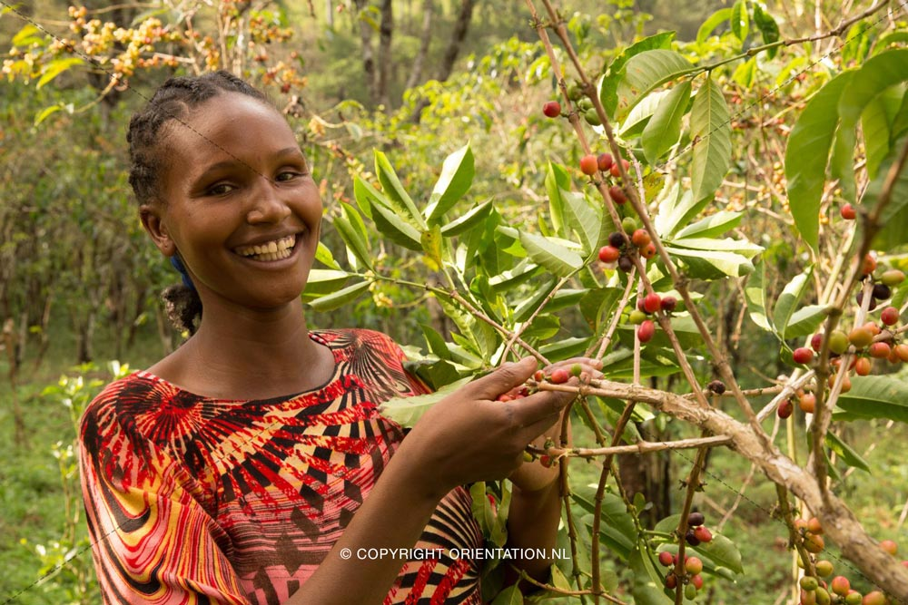 Fairtrade-Nederland-Koffie-Ethiopië-Effecten-klimaatverandering (22)