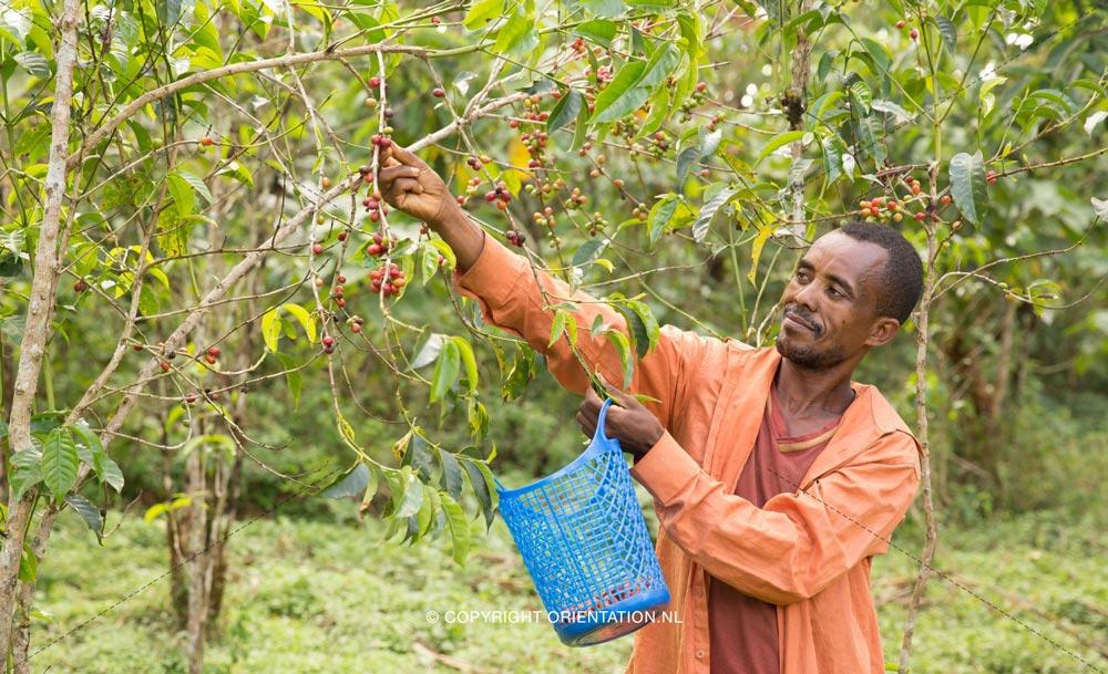 Fairtrade-Nederland-Koffie-Ethiopië-Effecten-klimaatverandering (23)
