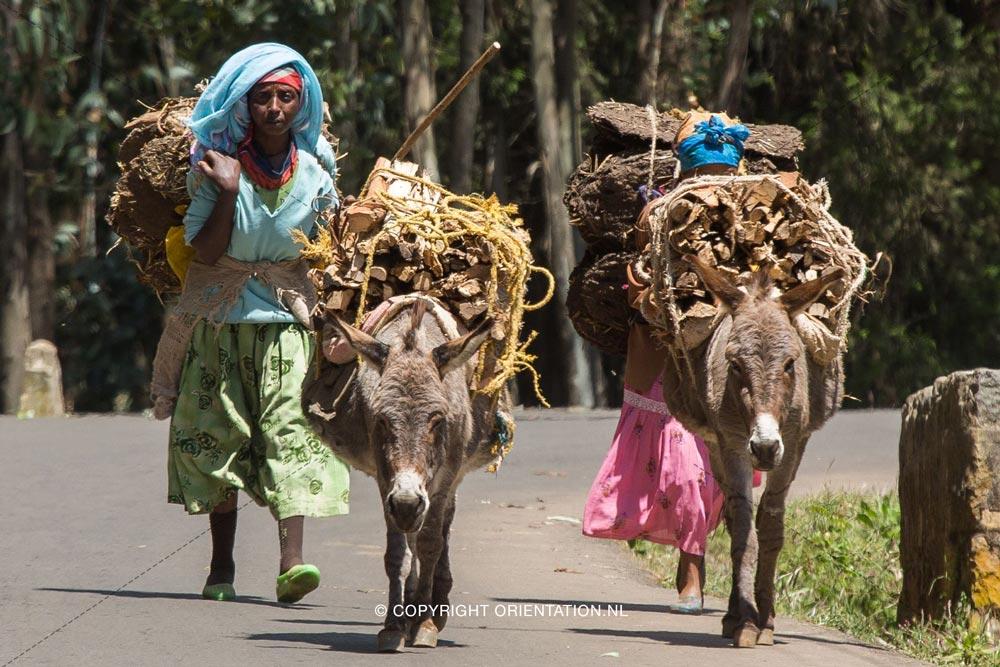 Fairtrade-Nederland-Koffie-Ethiopië-Effecten-klimaatverandering (3)