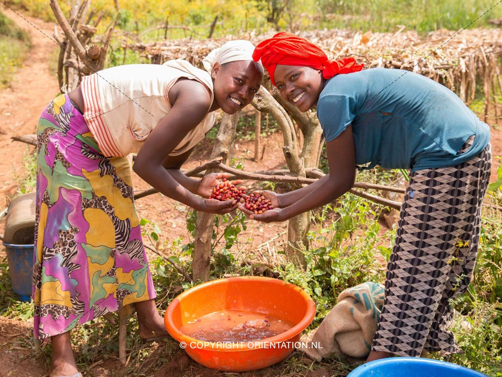 Fairtrade-Nederland-Koffie-Ethiopië-Effecten-klimaatverandering (7)