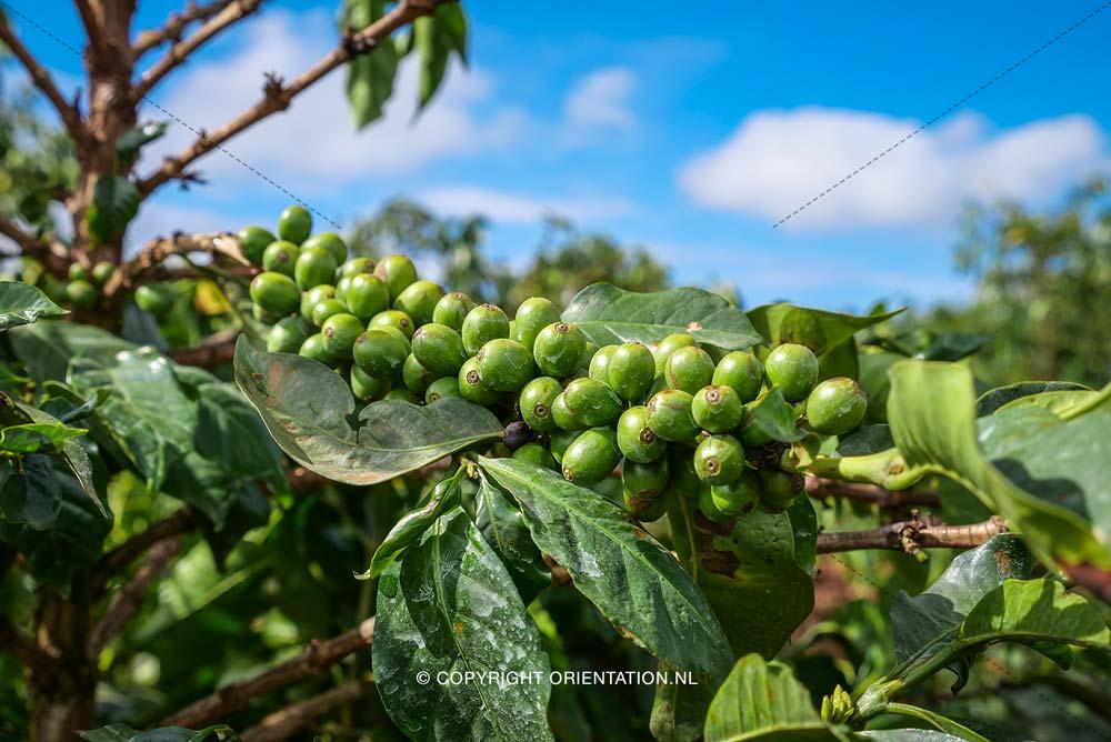 Fairtrade-Nederland_Climate-Academy_Kenia_01