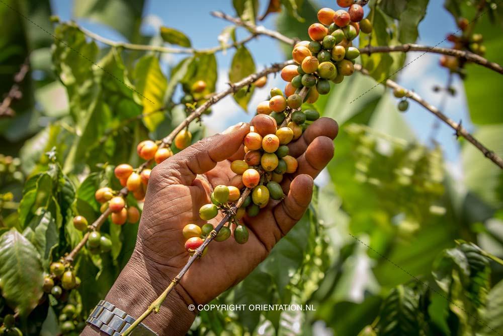 Fairtrade-Nederland_Climate-Academy_Kenia_09