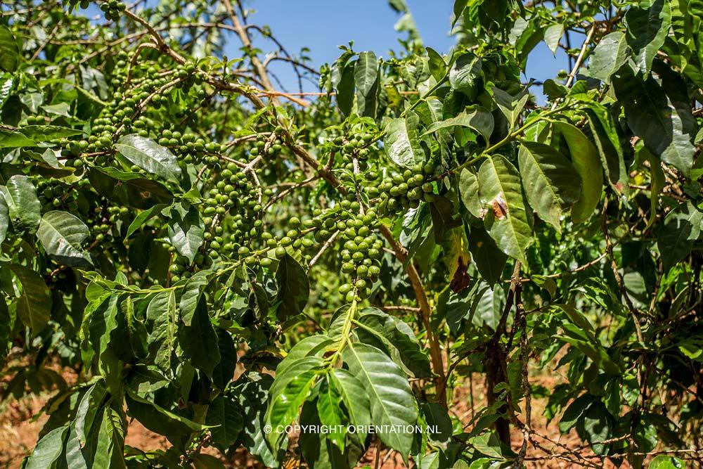 Fairtrade-Nederland_Climate-Academy_Kenia_19