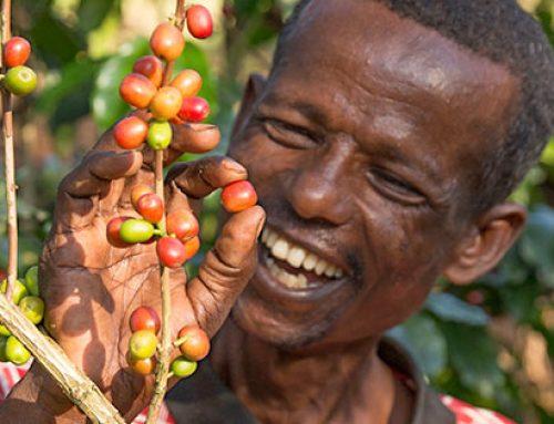 Ontmoet Fairtrade koffieboeren Silashi & Mulane