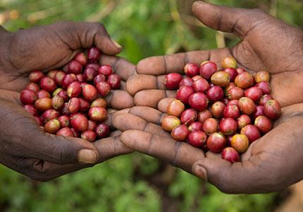Fairtrade-koffieboeren-Silashi-&-Mulane_img03