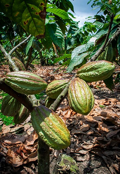 Nestlé-Cocoa-Plan_OTP_img05b