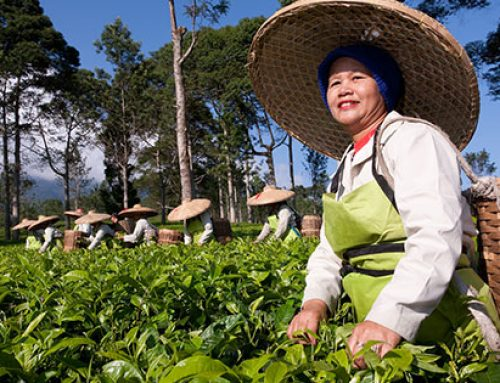 Pickwick Fairtrade Tea film